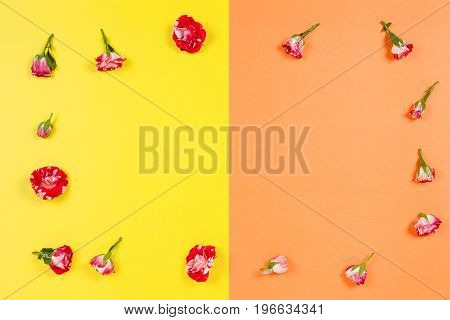 Floral border frame made of pink roses on yellow and orange background. Flat lay, top view.