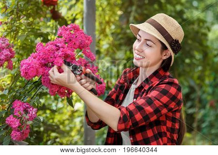 gardener girl trimming flowers with secateurs in the garden. Young woman taking care of rose bushes. People, gardening, care of flowers, hobby concept poster