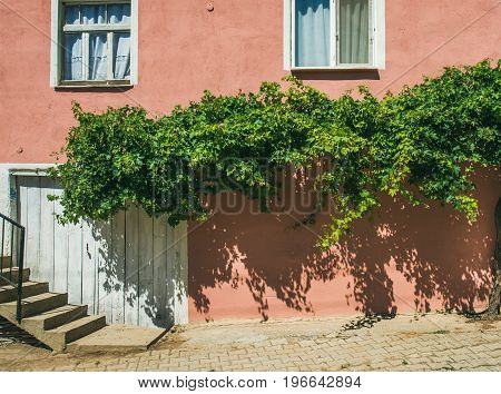 Pink wall with grape tree on house in Turkish village