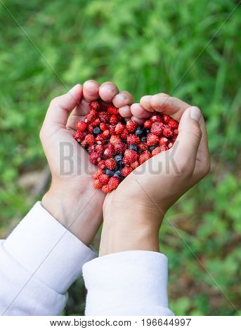 Closeup of Woman hands holding handful ripe fresh forest berries in heart shape. Blueberry and wild strawberry in human palm. vertical