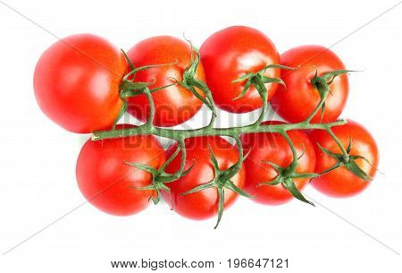 A composition of colorful and juicy tomatoes isolated on a white background. Freshly grown red tomatoes with dark green leaves. Delicious vegetables for organic homemade ketchup.