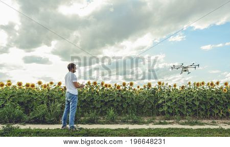 Young man watching and navigating a flying drone in blue clear sky over sunflower field.