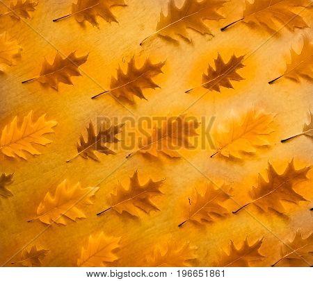 Autumn oak leaves background. Autumn oak leaf pattern
