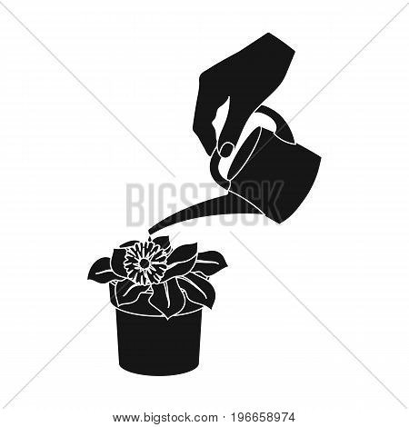 Watering the houseplant in a pot. Home Flower single icon in black style vector symbol stock illustration .