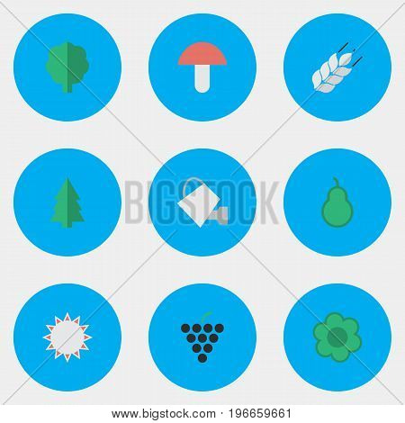 Elements Tree, Punching Bag, Sunny And Other Synonyms Grape, Boletus And Can.  Vector Illustration Set Of Simple Gardening Icons.