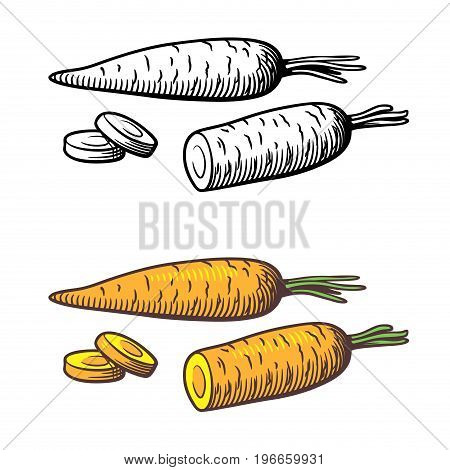 Vector stylized illustration of carrots outline and colored version. Isolated on white