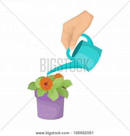 Watering the houseplant in a pot. Home Flower single icon in cartoon style vector symbol stock illustration .