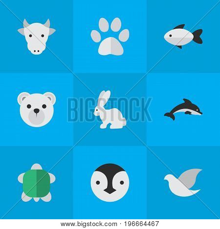 Elements Tortoise, Panda , Kine Synonyms Panda, Paw And Milk.  Vector Illustration Set Of Simple Animals Icons.
