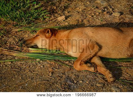 A Dog Sleeping On Rural Road At Sunny Day