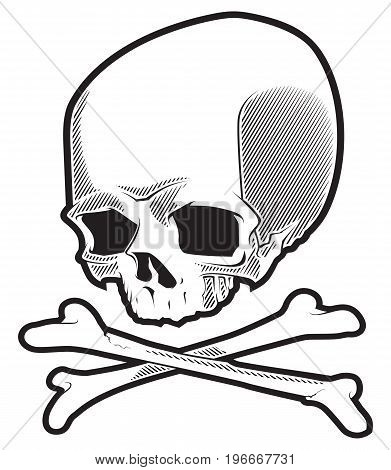 Cartoon skull with crossbones isolated on white background