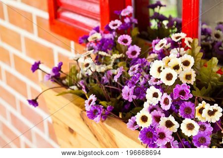 Decorative violet flowers in pot hanging on window
