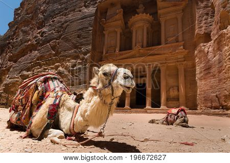 Two camels used by local guides for tourists entertainment and transport crouch in sand in front of the famous Petra Treasury.