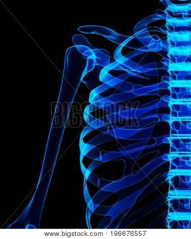 3D Illustration Of Shiny Blue Skeleton System.