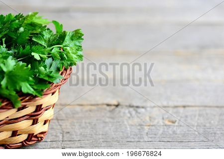 Green parsley leaves in a brown wicker basket on an old wooden background with copy space for text. Garden green parsley photo