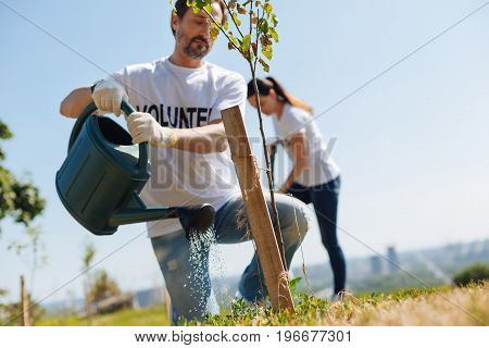 Lungs of the earth. Active charming clever guy being enthusiastic about nature and participating in eco initiative as a volunteer while watering newly planted trees