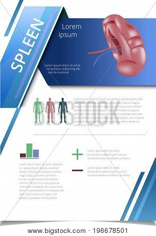 Internal human organs infographic. Medicine poster. spleen Medical brochure template. Vector illustration