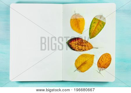 An overhead photo of a herbarium, a notebook with taped autumn leaves, on a teal background with a place for text