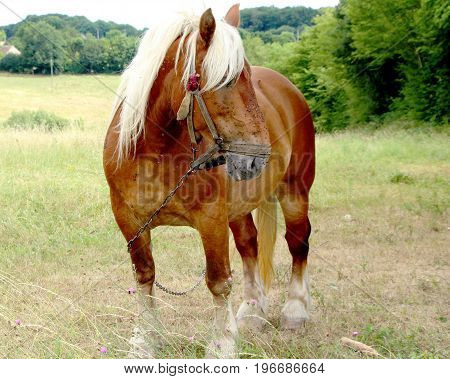 a beautiful horse in a field in summer