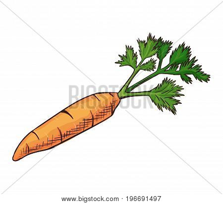 Carrot vector icon isolated, hand drawn sketch of vitamin vegetable, template for menu, healhty diet infographics, sticker, flyer, print