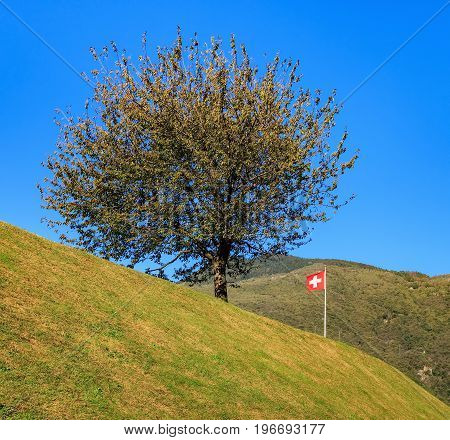 Landscape in Switzerland: a tree and the flag of Switzerland on the slope of a hill, mountains in the background. The picture was taken in the city of Bellinzona in the Swiss canton of Ticino at the middle of autumn.