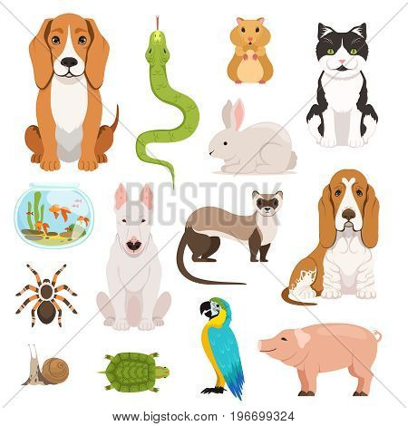 Big vector set of different domestic animals. Cats, dogs, hamster and other pets in cartoon style. Animal dog and cat, domestic hamster and rabbit illustration