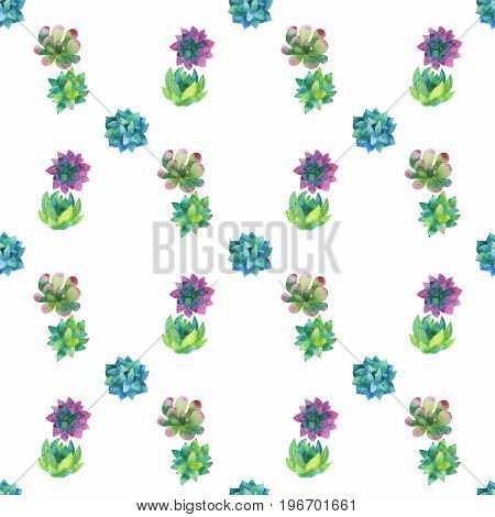 Hand painted pattern with succulent plants isolated on white background. For design or background