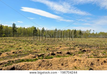 Open space in the forest after deforestation.