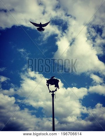 Pigeons summer under cloudy Paris blue sky