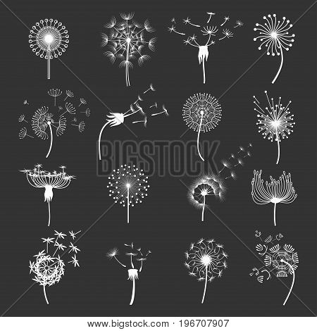 Dandelion flower set. Fluffy white puffball windblowing, spreading its seeds. Vector flat style illustration isolated on black background