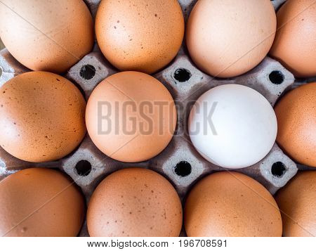Close-up view of raw chicken. Every egg is a yellow egg with the exception of white duck eggs.