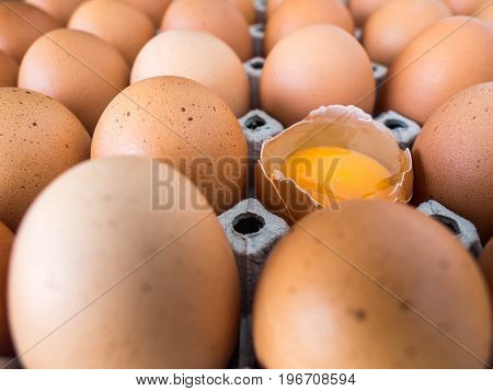 Close-up view of raw chicken eggs. Every egg is a chicken eggs and have one egg to crack.