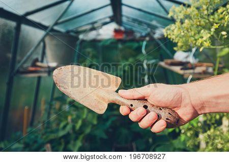 Work on the vegetable garden in the greenhouse. Gardener holding hand trowel.