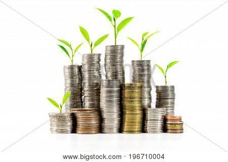 Trees are growing on a pile of coins over white background. Concepts of business money and business growth.