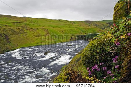 Iceland River Cascade With Pink Flowers Grass And Mossed Stones In Foreward