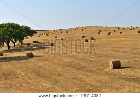 Stunning landscape with cork oak trees a harvested wheat field and rolled straw stacks against at sunset. Evora Alentejo Portugal