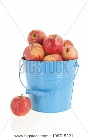 Blue bucket full red apples isolated over white background