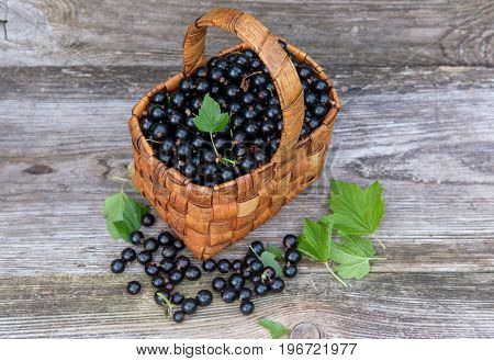 wicker basket with fresh berries of black currant on the old Board