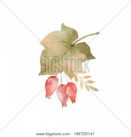 Watercolor autumn bouquet of leaves, branches and dogrose berries isolated on white background. Thanksgiving illustration for your design.