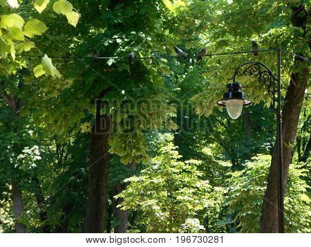 A street lamp and pigeons on a cable under dense tree canopy
