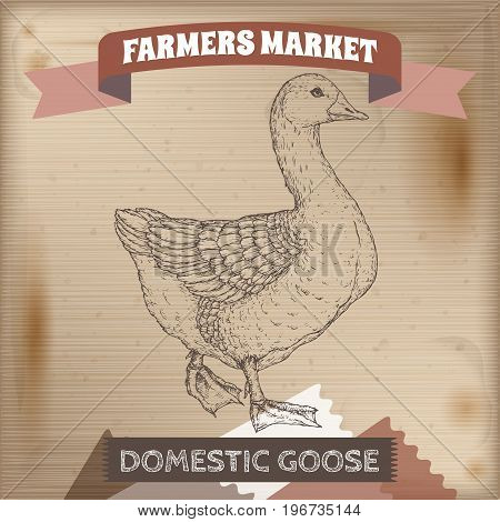 Vintage farmers market label with domestic goose. Placed on wooden texture. Includes hand drawn elements.
