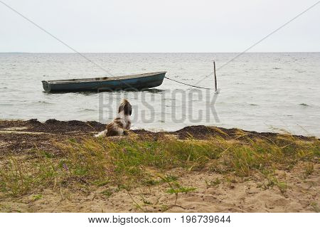 A dog on the river bank is waiting for the owner to swim away on an old boat