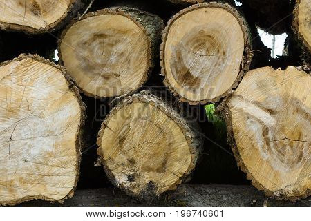 The stack of felled trees. Logging. Background.
