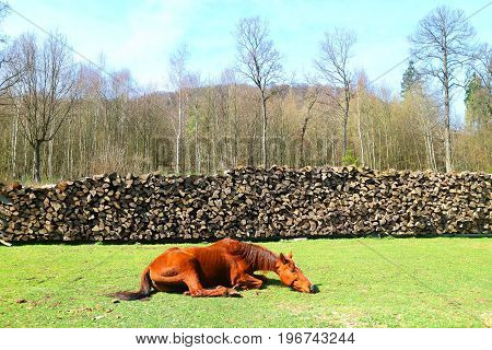 Lazy horse on the grass and a wall of firewood logs