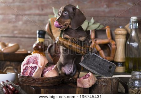 Puppy dachshunds and meat in butcher's shop