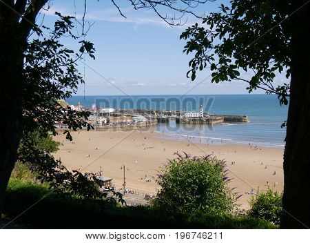 View of Scarborough beach and harbour framed by trees.