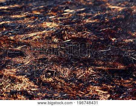 Closeup Arson And Burned Dry Grass Background