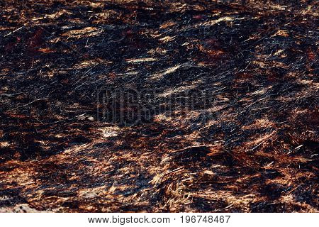 Closeup Burned Dry Grass Or Field Background