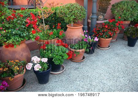Gardening, Flowers, Decoration Concept - Many Flowers In A Flowerpots At Street