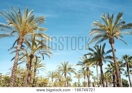Travel, Tourism, Vacation, Nature And Summer Holidays Concept - Palm Trees Over A Blue Sky Backgroun