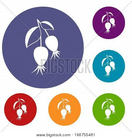 Dogrose berries branch icons set in flat circle red, blue and green color for web